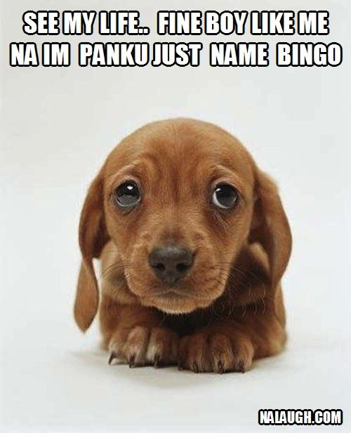 bingodog
