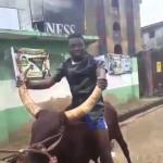 Video (random): Comedian Akpororo Riding a Cow to Maiduguri