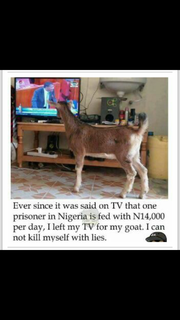 for goat